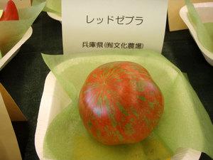 tomato7.jpg