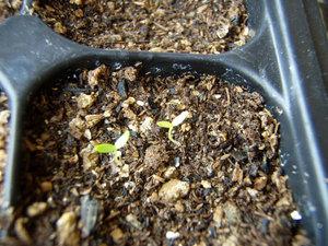 celery11.jpg